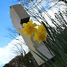 Death and Daffodils by Tibbs