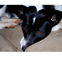Border Collie on the Sofa Photographic Print