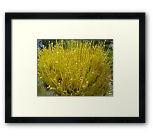 French Fry Flowers Framed Print