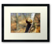 Snail on Wildcat Mountain Framed Print