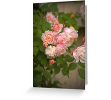 Pink Roses in HDR Greeting Card