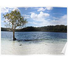 tree in the lake Poster