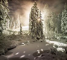 Light in the Forest by Nordic-Photo