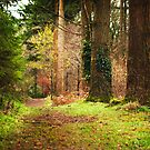 Ireland - Nature - Ravensdale by T M B
