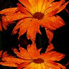 Orange Calendula Reflections by Tori Snow