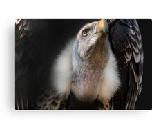 The Tax Official..  Canvas Print