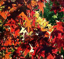 autumn leafs by laikaincosmos