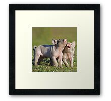 Two Cute Piglets Playing Framed Print