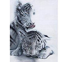 baby tigers Photographic Print