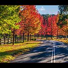 Autumn Cathedral by vilaro Images