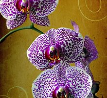 orchid flower by laikaincosmos
