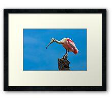 Roseate Spoonbill on Tree Trunk Framed Print