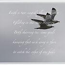 Two Seagulls  by DreamCatcher/ Kyrah Barbette L Hale
