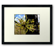 Appalachian Witch Hazel Framed Print