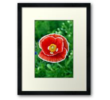 Red & White Poppy 512 Framed Print