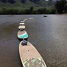 Surf Boards in Line by Adria Bryant