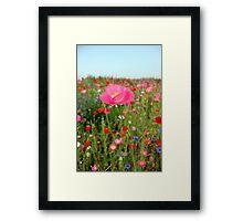 Poppy Riot 4 512 Framed Print