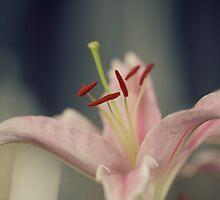 Flower power by DerekMacKinnon