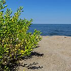 Lake Erie Beach Succulent by SRowe Art