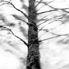 Shadow of Winter by SRowe Art