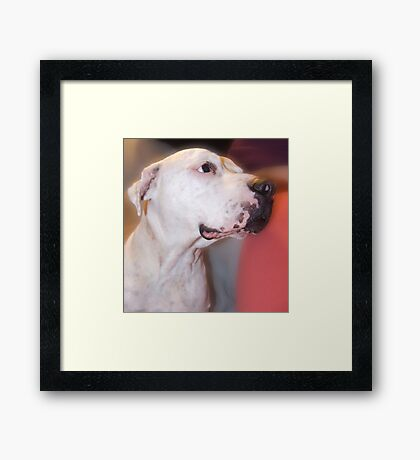 Pow pow the wonder dog Framed Print