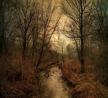 Wampus Brook 17 by Karen Johnson