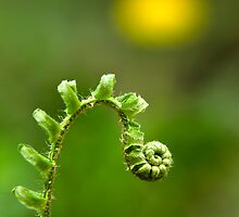 Sunrise Spiral Fern by Christina Rollo