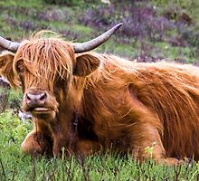 Chewing the Highland Cud #1, Scotland by Cherrybom