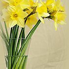 Narcissuses by flashcompact