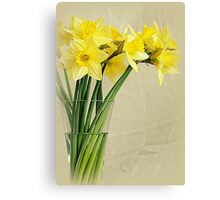 Narcissuses Canvas Print