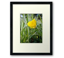 Buttercup with Dew  Framed Print