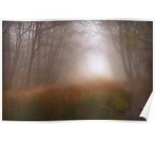 Trees Mist 1 Poster