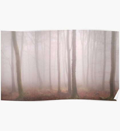 Trees Mist 2 Poster