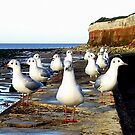 A Curiosity of Seagulls.  by Billlee