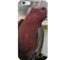 The Pink Galah iPhone Case/Skin