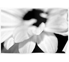 Black and White Daisy Study 2 Poster