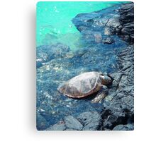 Big Island Hawaii turtle bright blue water print Canvas Print