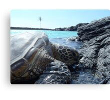 Lazy turtle on Hawaii beach Canvas Print