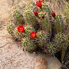 Beauty in the Desert by Lucinda Walter