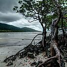 Cape Tribulation Mangroves by paulmcardle