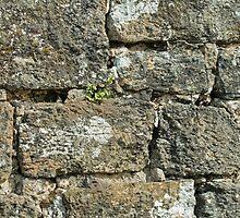 Stone Wall by Sue Robinson