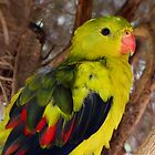 Beautiful Feathers - Regent Parrot by Alwyn Simple