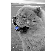 Ciao Chow Photographic Print