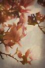 Textured Magnolia by Deborah McGrath