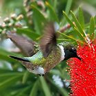 Black Chinned Hummingbird by SuddenJim