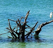 Snowy Perched On Driftwood by Debbie Oppermann