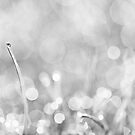 Natures Sparkle Dewdrops in Sunlit Grass Black and White by Natalie Kinnear