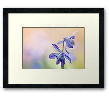 Colorful Scilla siberica (II) Framed Print