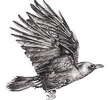 Crow by lalilouna