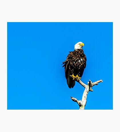 Watchful Eye Photographic Print